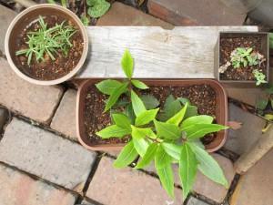 herb_20151023-2