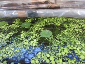 biotope 20151205 -6