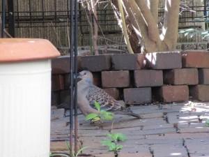 bird-feeder-visitor-20160221-10