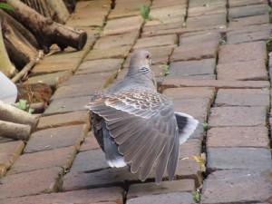 bird-feeder-visitor-20160221-11