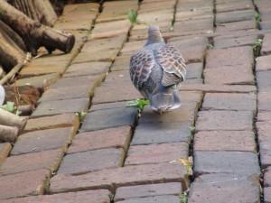 bird-feeder-visitor-20160221-12