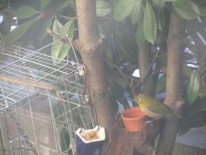 bird-feeder-visitor-20160221-16