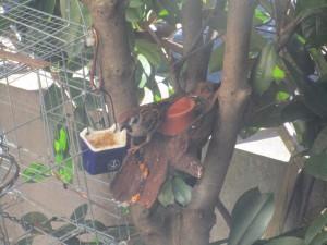 bird-feeder-visitor-20160221-18