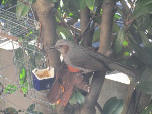 bird-feeder-visitor-20160221-19