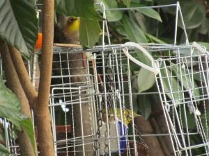 bird-feeder-visitor-20160221-5