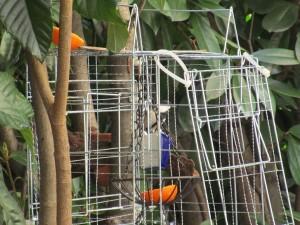 bird-feeder-visitor-20160221-6
