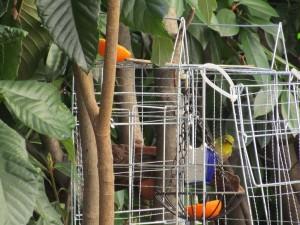 bird-feeder-visitor-20160221-7