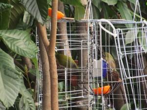 bird-feeder-visitor-20160221-9