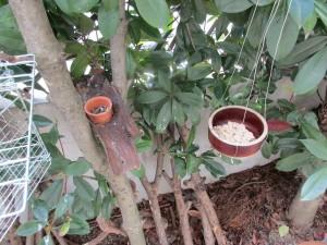 bird-feeder-no-3・no-4-・no-5-20160306-6