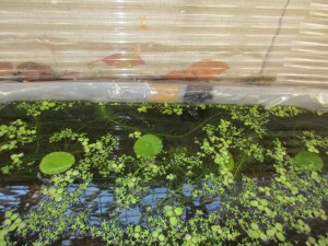 biotope-homemade-20160302-4
