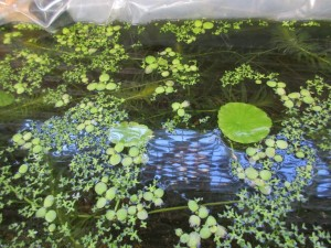biotope-homemade-20160302-5
