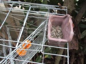 bird-feeder-no-4-repair-6