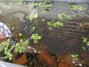 biotope-homemade-20160416-2