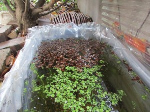 biotope-homemade-20160417-2
