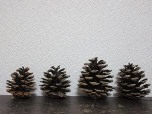 pine cones-pick-up-max-20160428-1