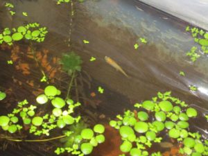 biotope-homemade-20160506-3