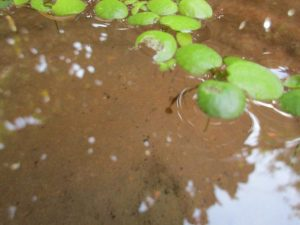 biotope-homemade-20160507-5