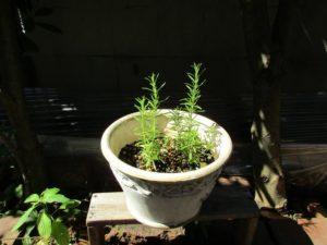 herb3-20160522-4