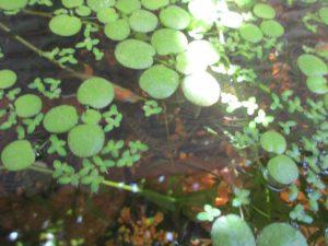 biotope-homemade-loach-20160604-3