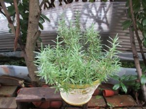 herb3-20160924-2